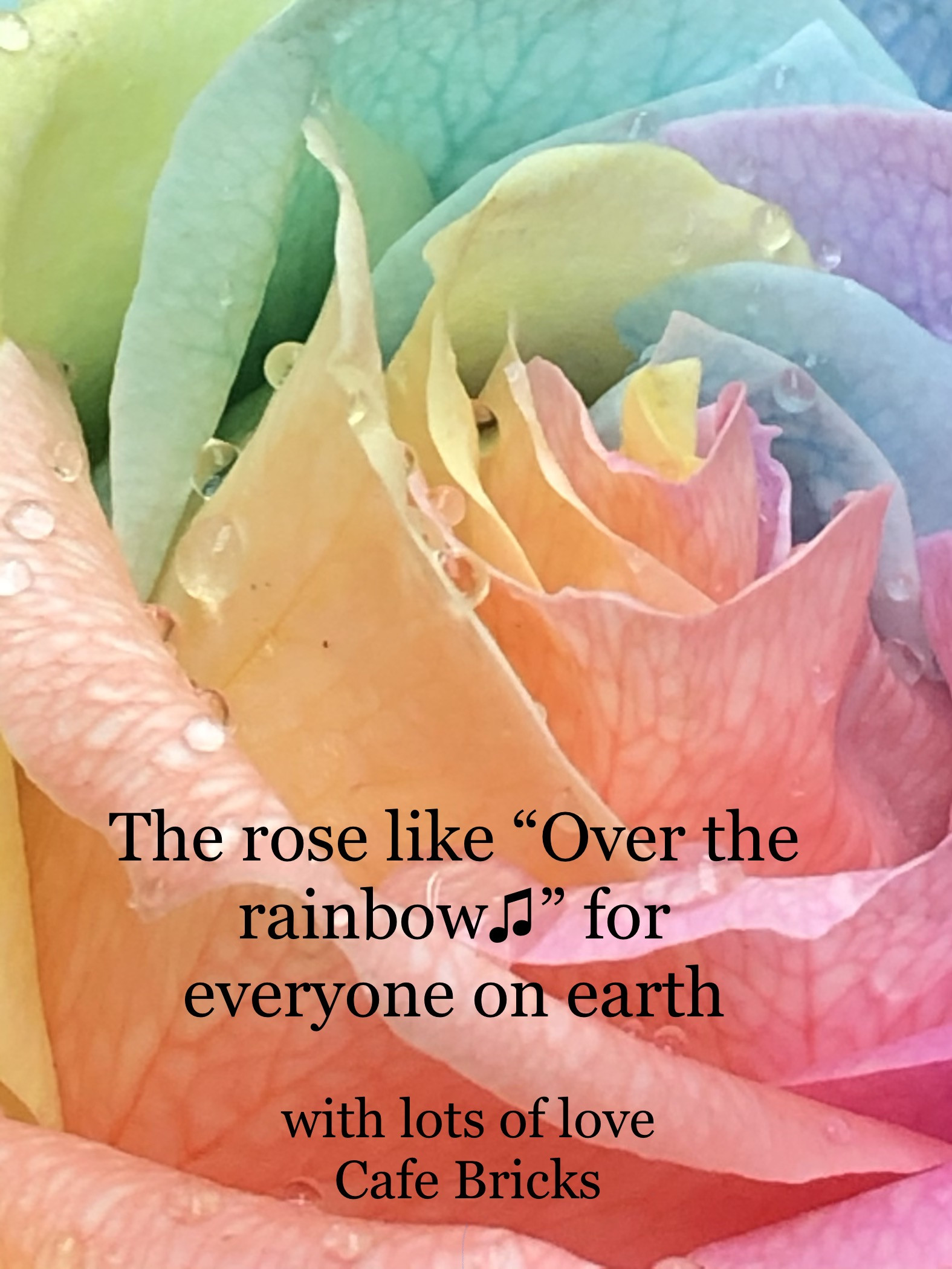 "The rose like ""Over the rainbow"""
