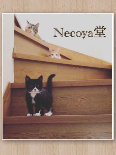 02_Necoyadou.jpg