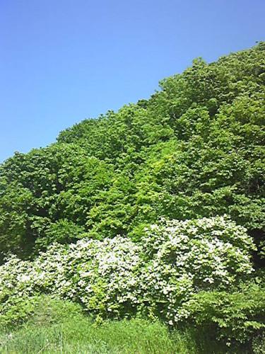 200613_まうた元気の森.jpg