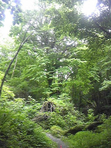 200628_蟲師の森.jpg
