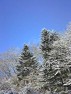 170226_ふれあい広場 松・雪.jpg