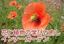 花・星・植物の学びと癒し/インナーガーデン