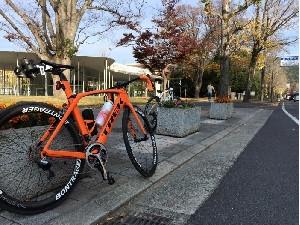 Cicli Pioniere(チクリ・ピオニエーレ)