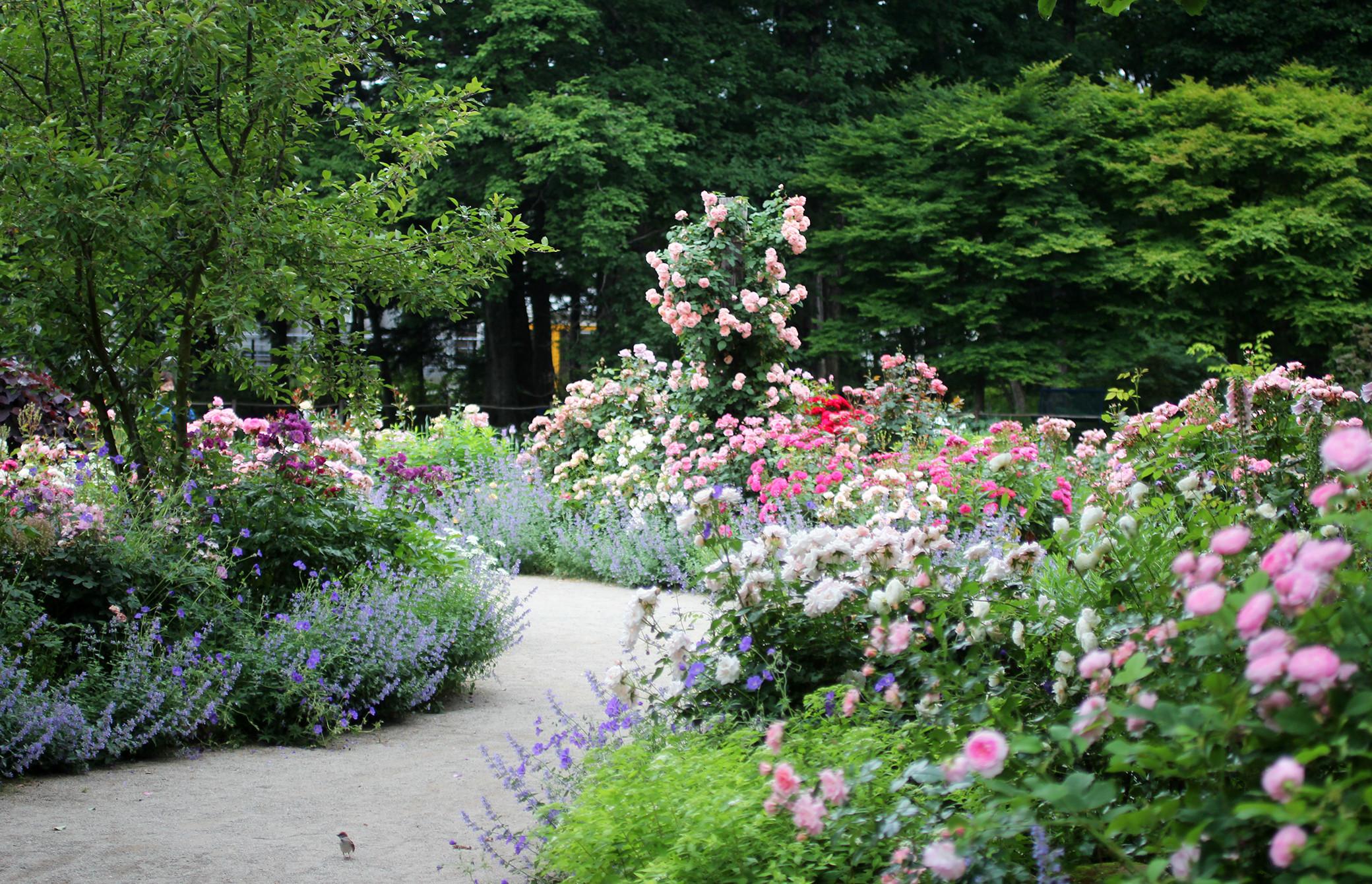 ガーデン コピス