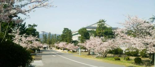 sakura-road.jpg