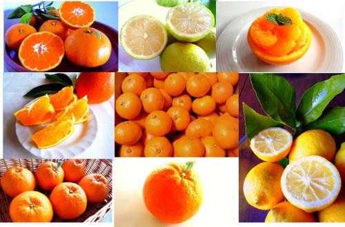 島柑橘.jpg