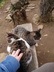 猫べんち_768x1024.jpg