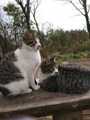 猫ズ_768x1024.jpg