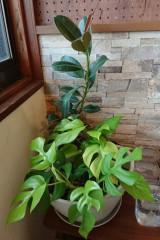 裏控え観葉植物2_768x1152.jpg