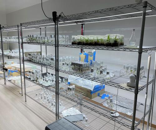 メリクロン研究室.JPG