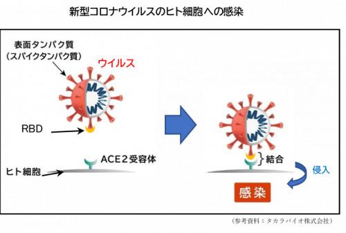 コロナ感染図.png