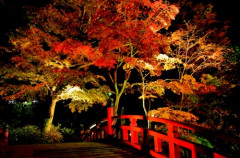 梅園紅葉ライトアップ.jpg
