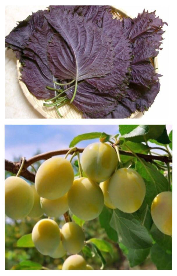 長崎産 無農薬 梅赤シソの酵素
