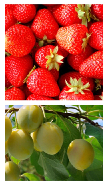 3月苺の酵素と苺のグラノーラレッスン