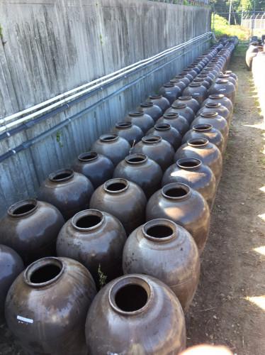 甕酢(黒酢)畑甕洗い20200818-3.jpg