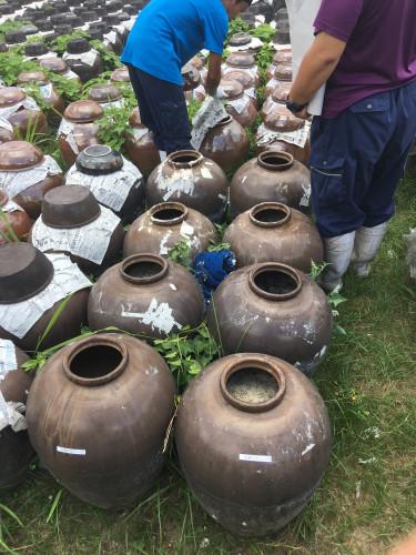 黒酢(甕酢)発酵確認と攪拌作業20200826