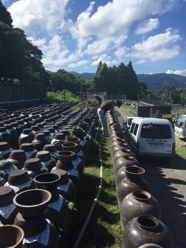 黒酢(甕酢)汲み上げ作業20200831.JPG