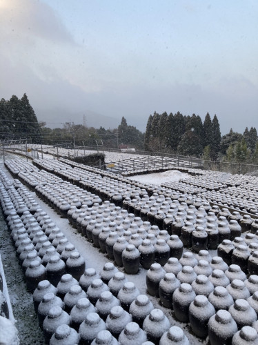 20210218 『黒酢畑も雪で真っ白』.jpg