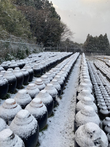 20210218 『黒酢畑も雪で真っ白』2.jpg