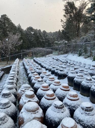 20210218 『黒酢畑も雪で真っ白』3.jpg