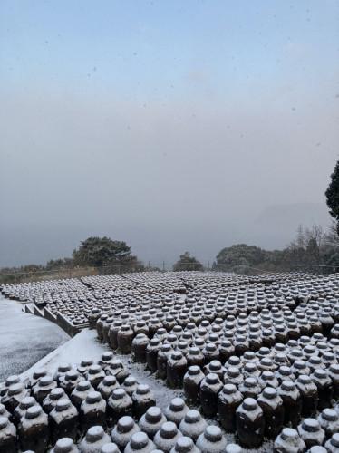 20210218 『黒酢畑も雪で真っ白』4.jpg