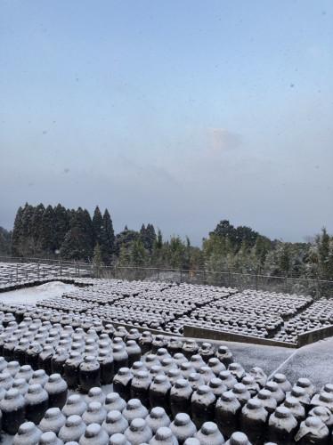 20210218 『黒酢畑も雪で真っ白』5.jpg