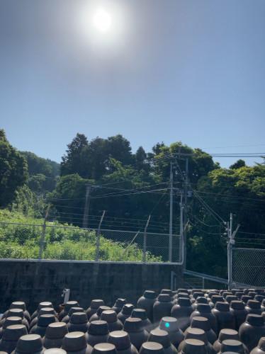 20210602『鹿児島黒酢・甕酢畑晴れやかな天気』.jpg