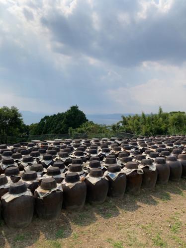 20210705『鹿児島黒酢・甕酢 午後の桜島と黒酢畑』2.jpg