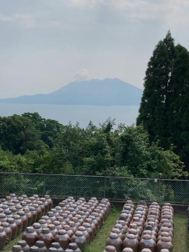 20210705『鹿児島黒酢・甕酢 午後の桜島と黒酢畑』.jpg