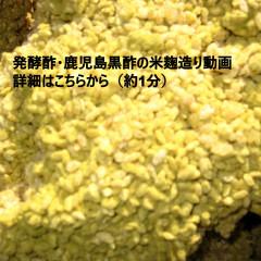 米麹造り動画2.jpg