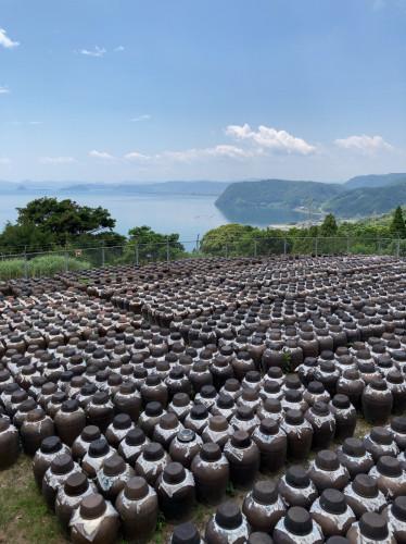 20210717『鹿児島黒酢・甕酢 朝の黒酢畑』.jpg