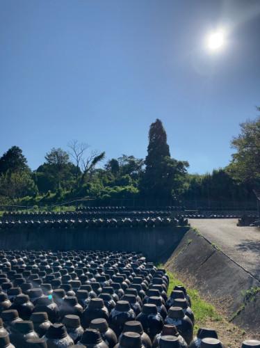 20210830『快晴の黒酢甕畑』2.jpg