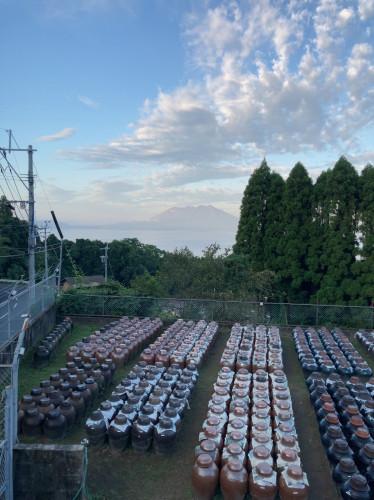 20211001『朝露に濡れる黒酢畑』.jpg