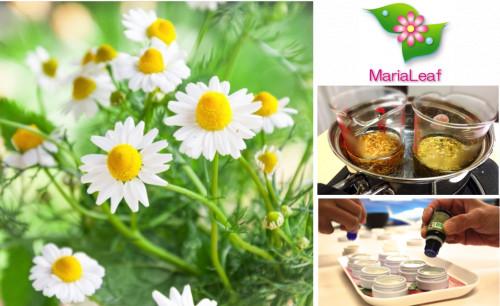 女性のための植物療法4.png