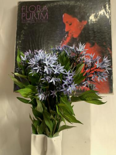柳葉丁字草の花