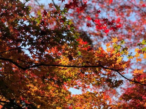 空、紅葉.jpg