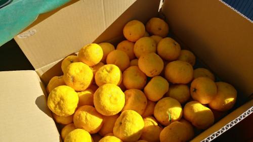 柚子の里…越生から、無農薬の柚子を!