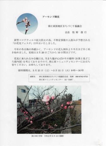 アーモンド開花案内.jpg