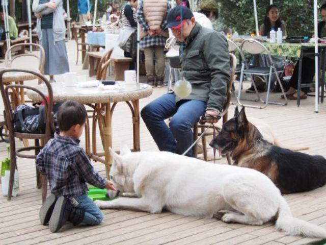 ワンちゃんも楽しめると人気!大多喜ハーブガーデンのドッグカフェ
