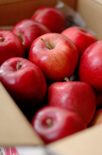 紅玉りんご.jpg