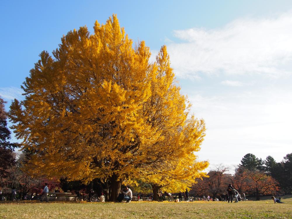 練馬区光が丘公園の黄葉2018年