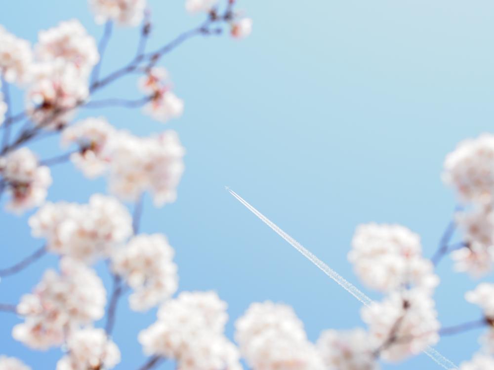 練馬南田中に仕出し弁当の宅配【春イベント】