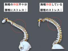 胸椎・胸郭-もけい2.006-580x435.jpg