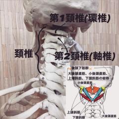 頚椎.jpg