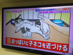 0621生き物にサンキュ (7).JPG