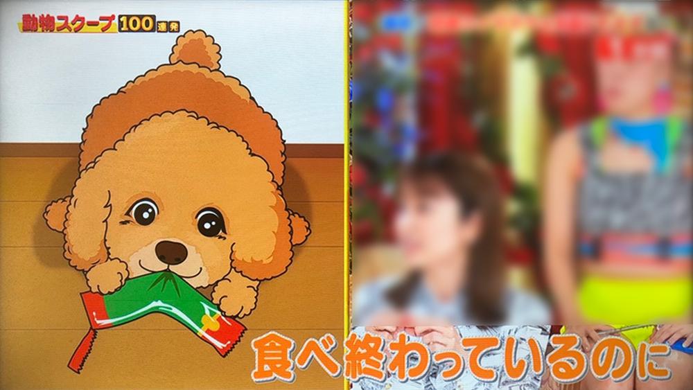 0729動物04.jpg