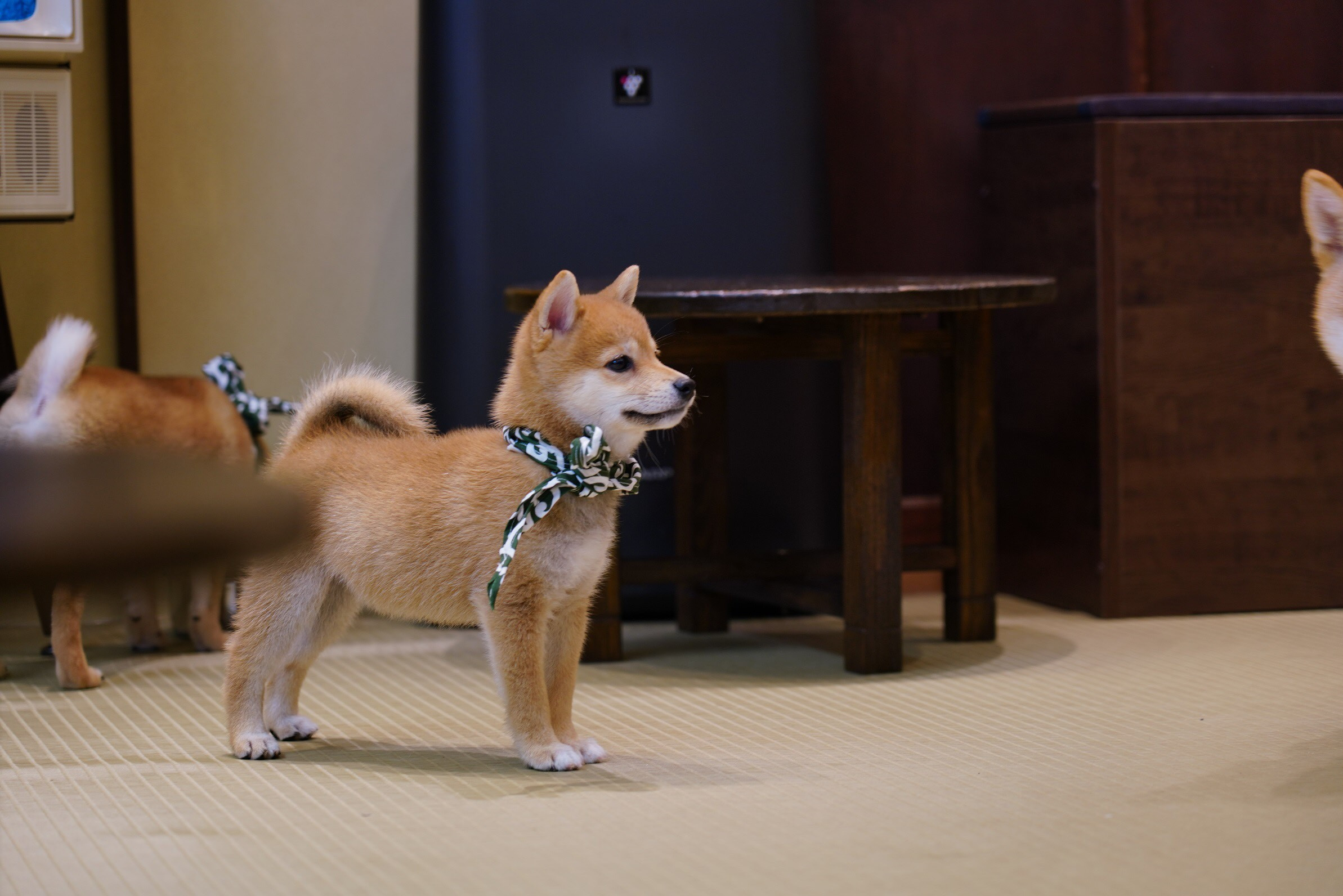 赤子犬.jpg