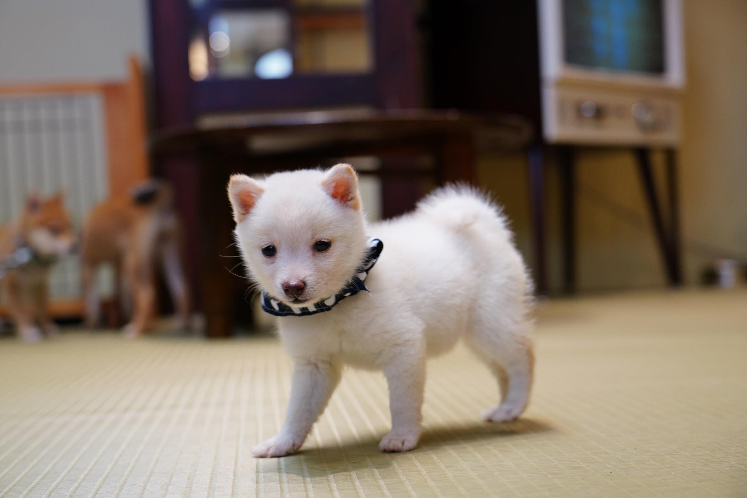 白子犬.jpg