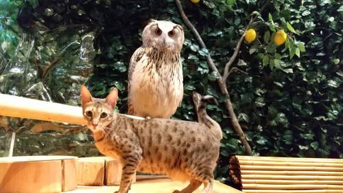 猫とフクロウ2.jpg