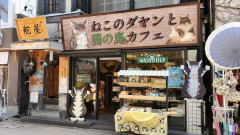 猫の島カフェ外観.jpg